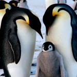 ¿Qué animales habitan en la Antártida?