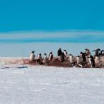 ¿Cuál es la temperatura en la Antártida?